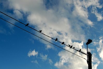 DAG 159 * BIRDS ON A WIRE  -- 07/06/12